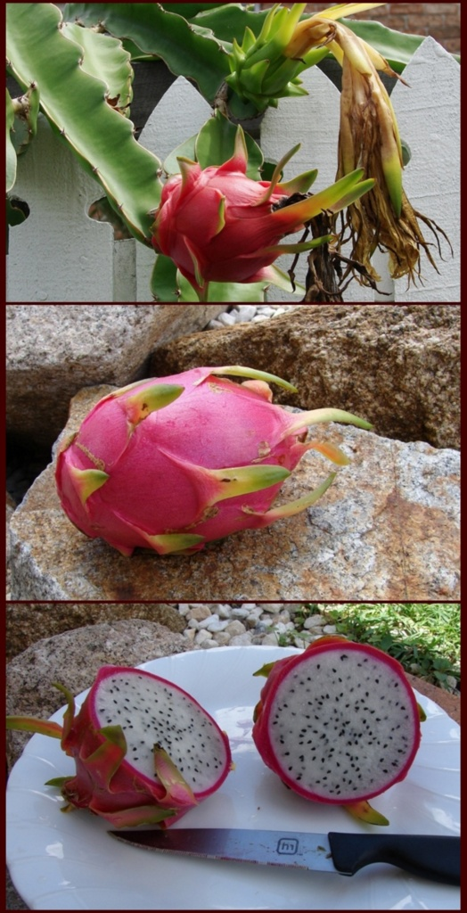 Dragon fruit: Wiki facts for this cookery ingredient
