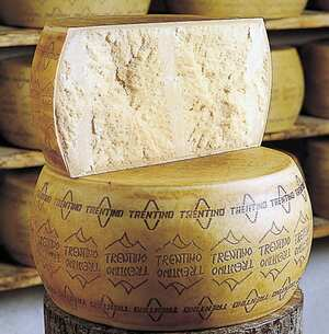 grana trentino cheese suppliers pictures product info rh cookipedia co uk