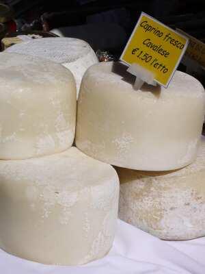 caprino cheese
