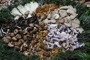 Which Mushrooms Have The Most Nutritional Value