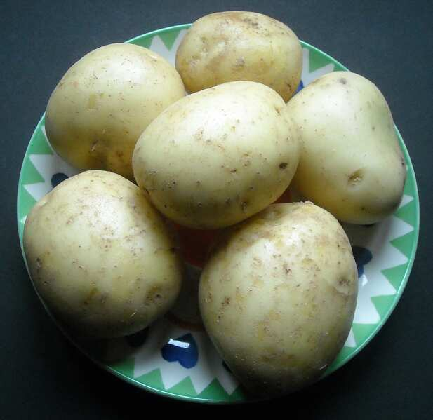 File:Marfona potatoes.jpg