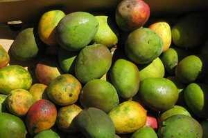 Ripe mango raita, Indian recipe
